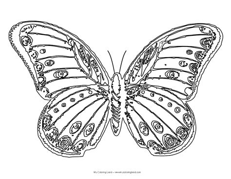 beautiful coloring pages of butterflies templates pattern stencils