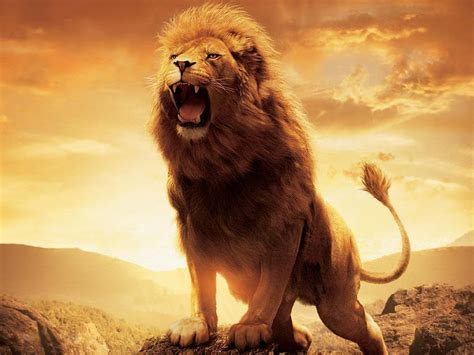 imagenes de leones animales fondos de leones en hd taringa