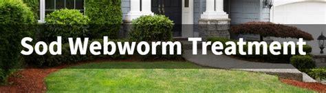 florida sod webworm treatment pest control jupiter