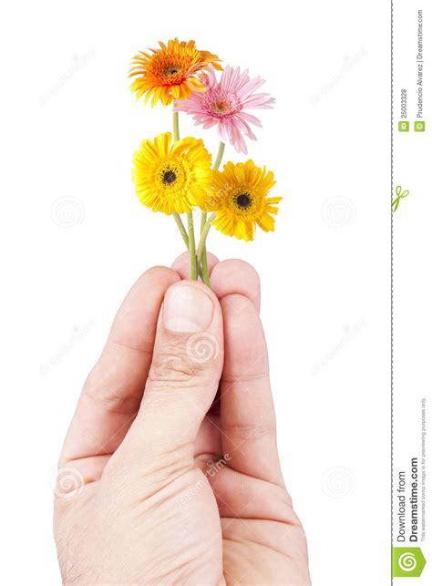 imagenes de flores libres flores fotos de archivo libres de regal 237 as imagen 25003328