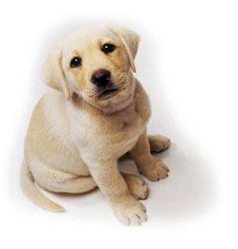 imagenes de animales bonitos image gallery imagenes de perritos bonitos