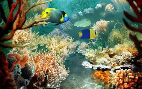 fish for life a download free ocean wallpapers most beautiful places in the world download free wallpapers