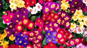 Brighten Up A Dark Room brighten your home with the perfect winter flowers