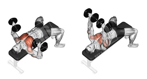 flat bench dumbbell chest press flat dumbbell bench press