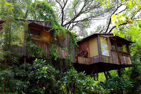 tree house resort tree house resorts in india little black book bangalore
