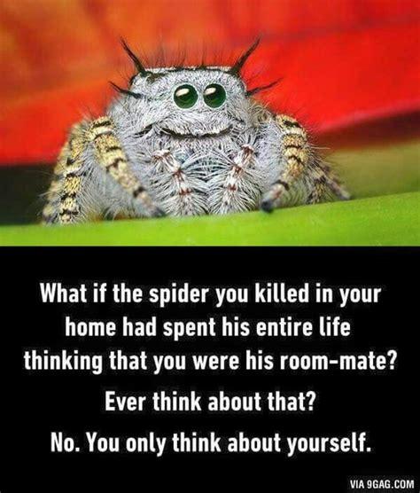 Cute Spider Meme - spider meme funny humor memes ecards gifs pinterest