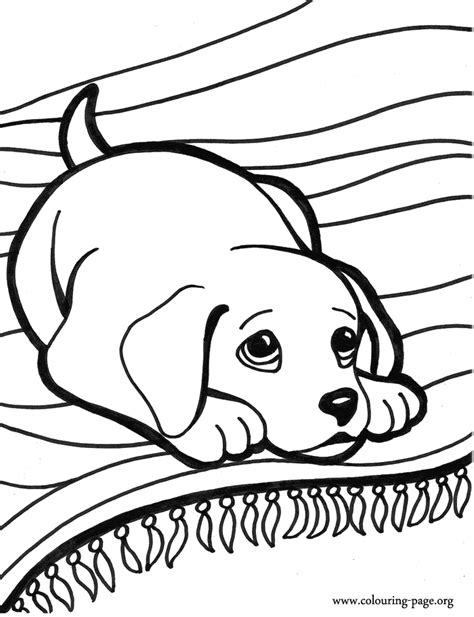 coloring pages of little dogs dogs and puppies a little dog on the carpet coloring page