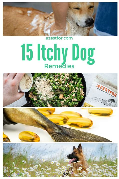 itchy home remedy the 25 best itchy remedies ideas on itchy skin remedy itchy