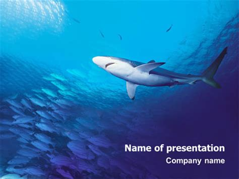 Ocean Wildlife Presentation Template For Powerpoint And Keynote Ppt Star Shark Powerpoint Template