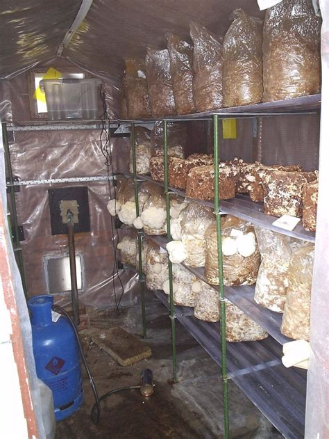 small shed  profitable mushroom production