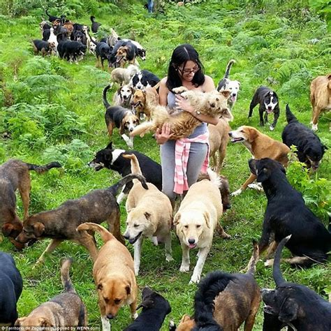 puppy land paradise land of the strays in costa rica where nearly 1 000 run free