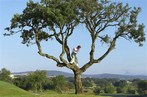 golf tree how to proceed when your golf is stuck in a tree