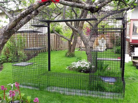 backyard cat enclosure outdoor cat enclosure beautiful world living environments