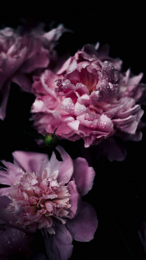 Wallpaper Iphone 7 Flower | vintage pink flowers iphone 7 wallpaper preppy wallpapers