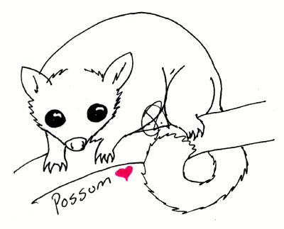 Possum Hanging Drawing Possum Colouring Pages