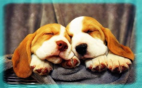 imagenes libres animales picard 236 a en postales de perros tiernos banco de im 225 genes