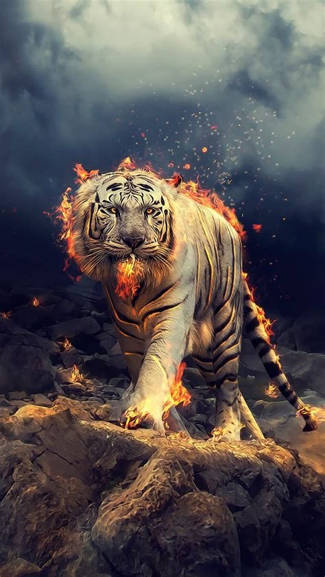angry raging white tiger  wallpaper tiger