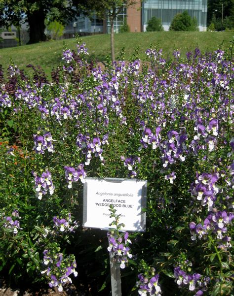 Amherst Garden Center by Umass Amherst Our Not So Secret Gardens Center For