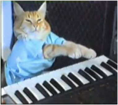 Keyboard Cat Meme - welcome to our rockin priv party on categorical privilege
