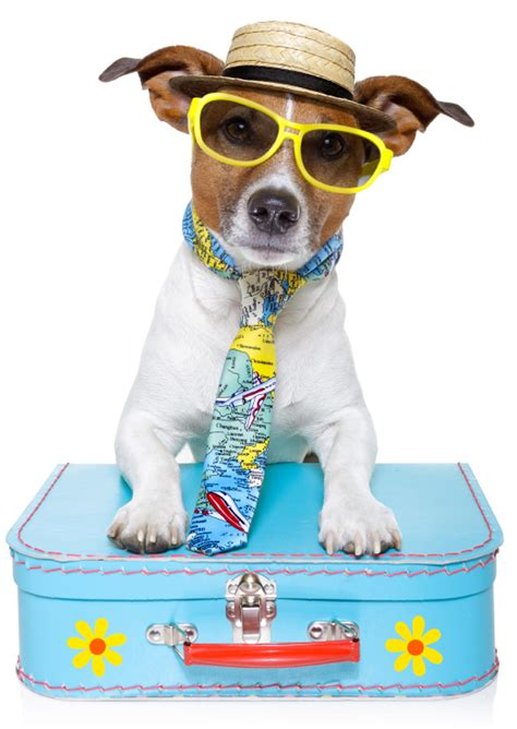 Vacation Pet Pet Pet Product by Float Away This Summer With This Pet Friendly Cruise Line