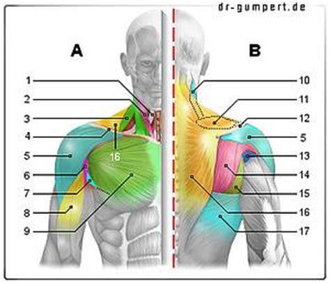 schmerzen im rechten bein beim liegen muskulatur