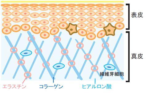 Colla Skincare micro colla g essence 三重膠原再生精華素 eskinbuy skincare shop