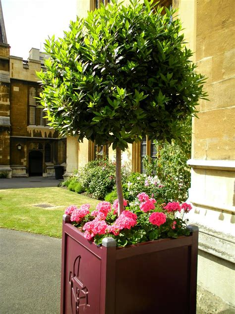 Bay Tree Planter by Gallery