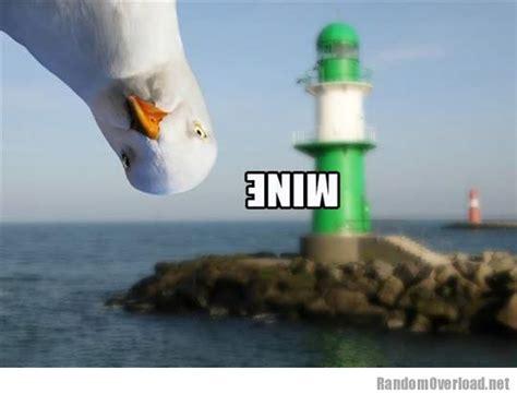 Finding Nemo Seagulls Meme - suddenly a seagull randomoverload
