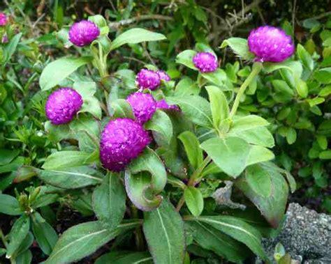 Lu Hias Dan Nya 101 nama bunga dan tanaman hias alamendah s