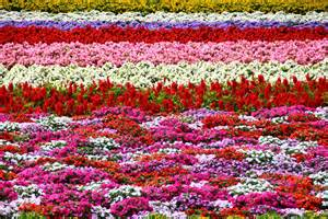 Amazing Flower Garden Amazing Flower Garden In Furano Guidest