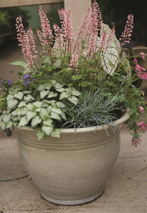 shade perennial combo pot potted plants pinterest