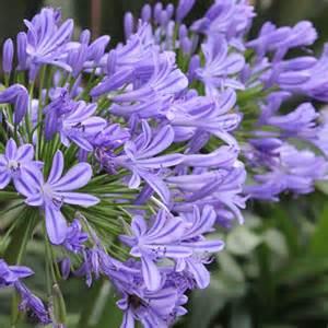 blau bl 252 hende pflanzen und blumen bestimmen