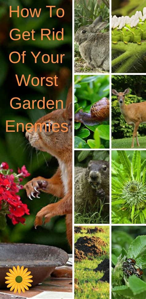 how to get rid of mice in backyard 100 how to get rid of mice in backyard get rid of