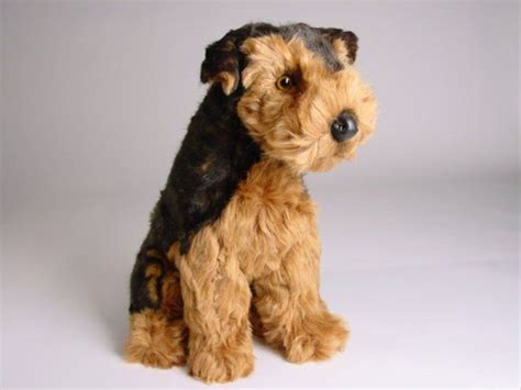 airedale terrier puppy 17 best ideas about baby on 2014 of the apes and