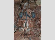 Cat Manuals / Blue3Main excretory system Female Urinary System Anatomy