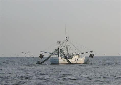 shrimp boat tour hilton head sc 23 best hilton head images on pinterest pine pine tree