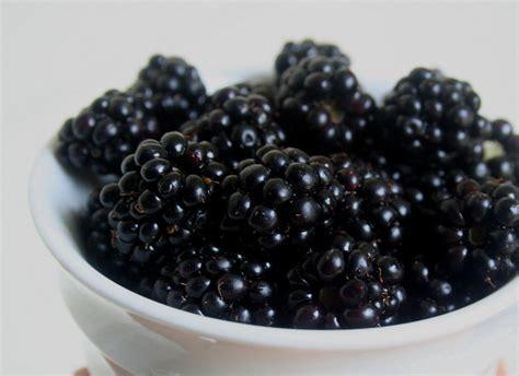 Blackbarry Jump Fruit blackberry imagination s ink