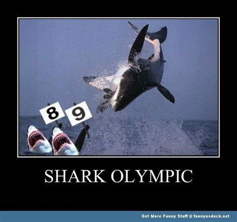 Meme Shark - shark week top 15 incredibly hilarious shark memes tops