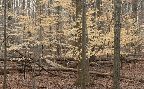 Trees That Shed Their Leaves In Winter by Jim Clark Photography Notes From The Field