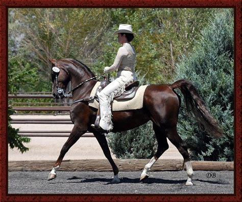 cowboy dressage and competing with kindness as the goal and guiding principle books western dressage attire western dressage