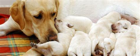 perros e hijos de 6071135443 exito personal madres mascotas con sus hijos