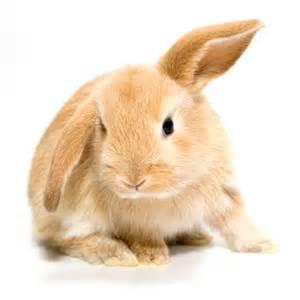 les affections de la peau chez les rongeurs et lapins