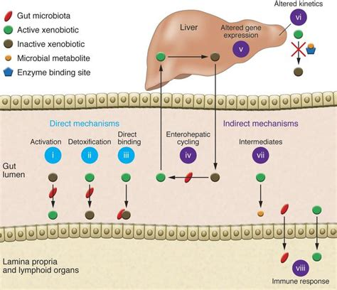 Metabolism Detoxes by Jci Host Microbial Interactions In The Metabolism Of