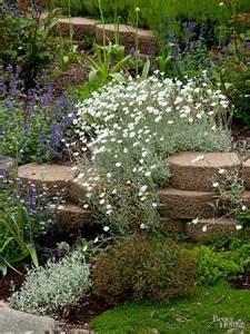 Rock Garden Perennials Best Plants For Rock Gardens Plants Rocks And In Summer