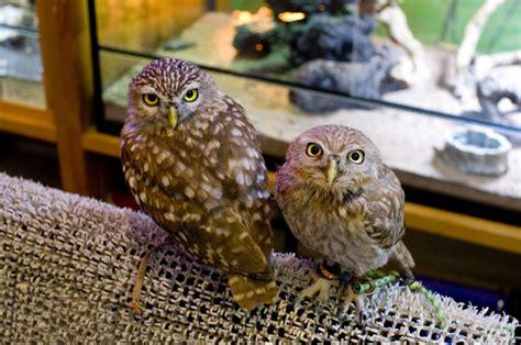 Zoo Zoo Brush Owl cafe zoo chiba