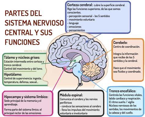 imagenes vectoriales y sus caracteristicas 10 caracter 237 sticas del sistema nervioso