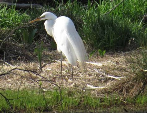 april 22 2013 this egret seemed to be shading its white feather bed mattress sale