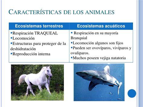 100 ejemplos de animales terrestres y acuticos ecosistemas terrestres y acu 225 ticos