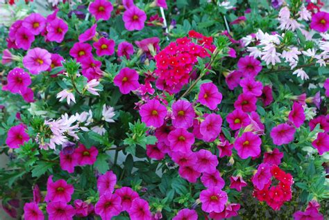 Annual Container Planting Dirt Simple Garden Flowers Annuals