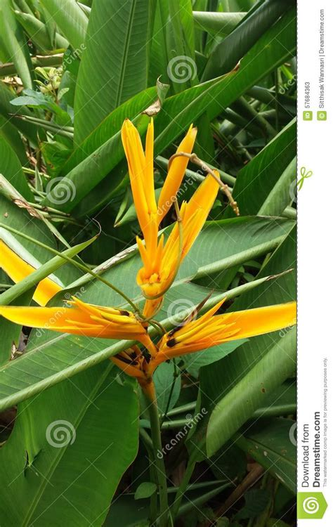 colorful flowers picture orange flowers in bloom light light orange flower color stock photo image 57684363